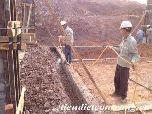 Chống mối tại Bắc Ninh
