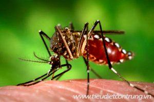Phun muỗi tại khu công nghiệp Tân Trường