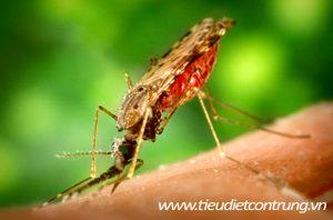 Phun muỗi tại Đồ Sơn