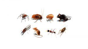 Phun côn trùng tại KCN Nam Cầu Kiền